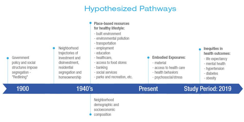 Hypothesized pathways